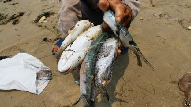 160427135501_vietnam_fish_624x351_afp
