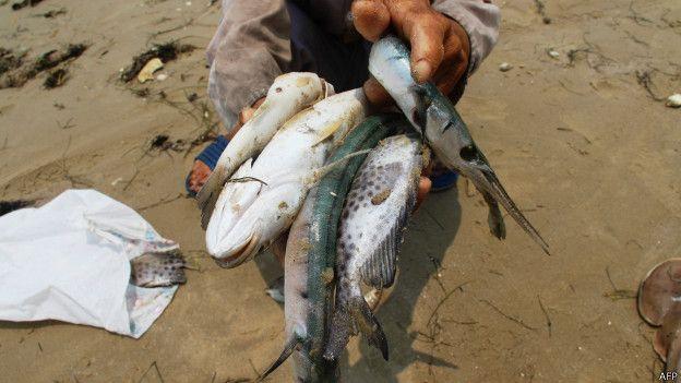 160427135501_vietnam_fish_624x351_afp