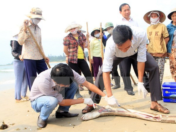 照片來源:vietnam plus