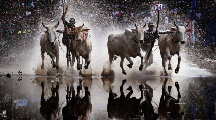 ox-racing-festival-in-an-giang-vietnam-jpg-1400x500_q85_crop